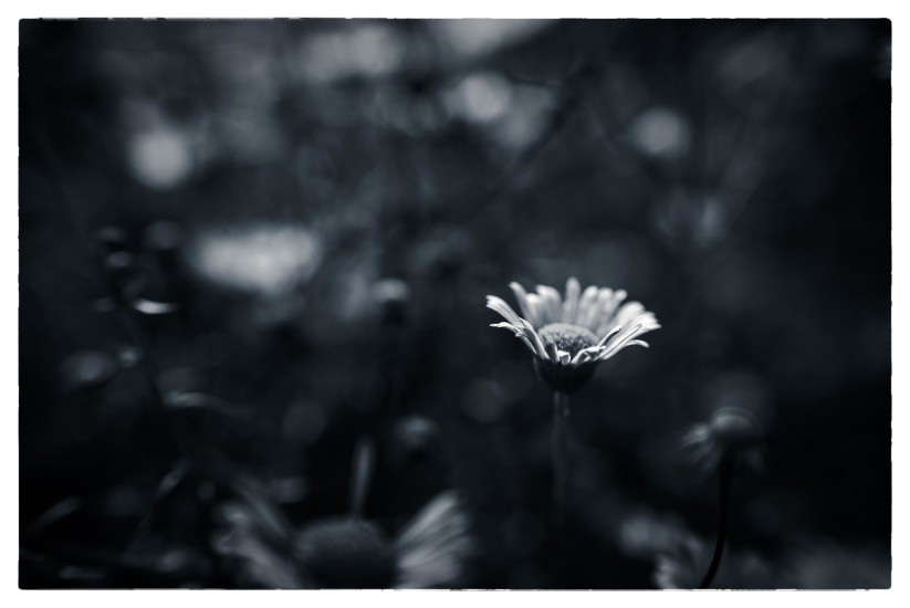 _1310668_Snapseed