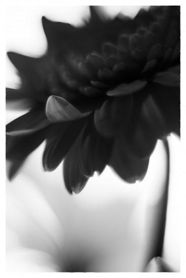 _1410745_Snapseed