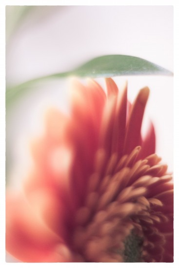 _1410821_Snapseed