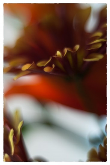 P1160208_Snapseed