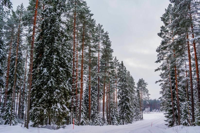 Finland 33