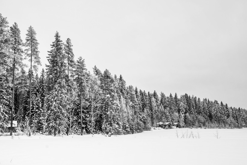 Finland 39