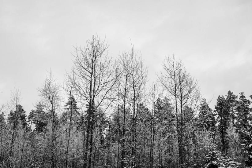 Finland 40