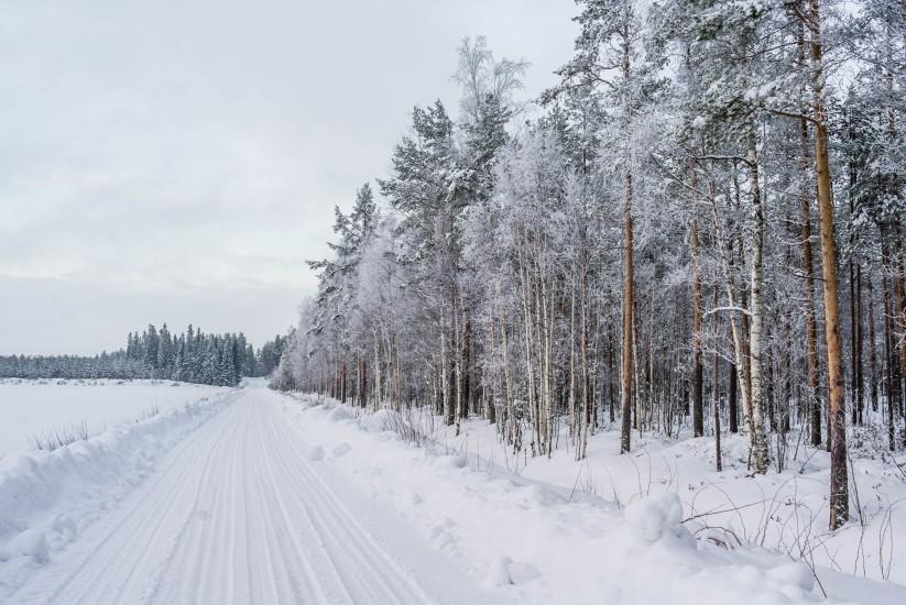 Finland 49
