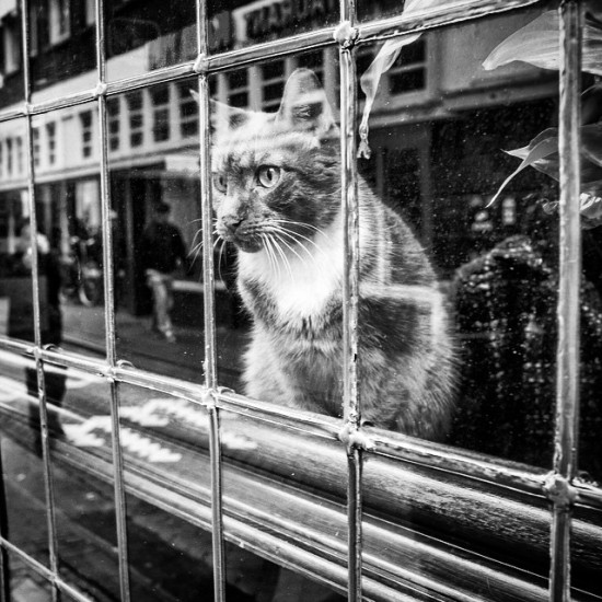 A friend I met while street-shooting (between meetings) in Amsterdam