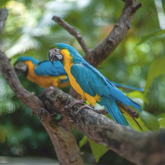 Parrots in Thailand