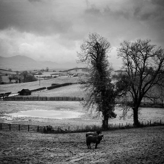 Even the horses need coats in Ireland