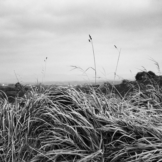Where Wild Grasses Grow