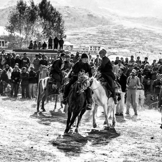 Horse control, Zanskar, Jammu and Kashmir, India