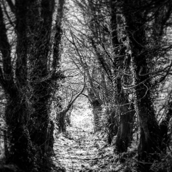 Where the trees bend and bow